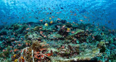 Rafa koralowa, Fot. Shutterstock.com