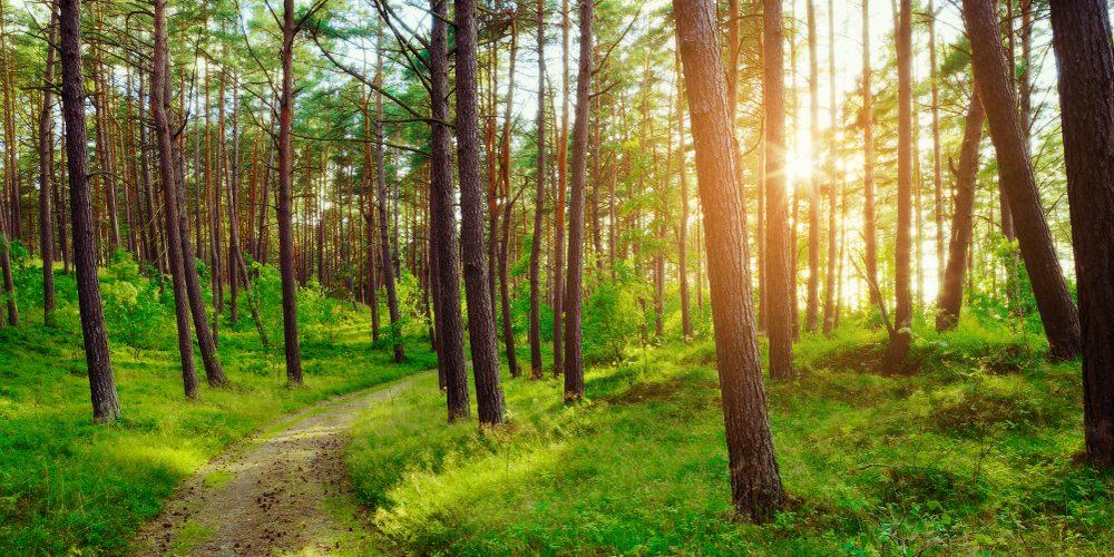 Ścieżka w lesie. Fot. Shutterstock