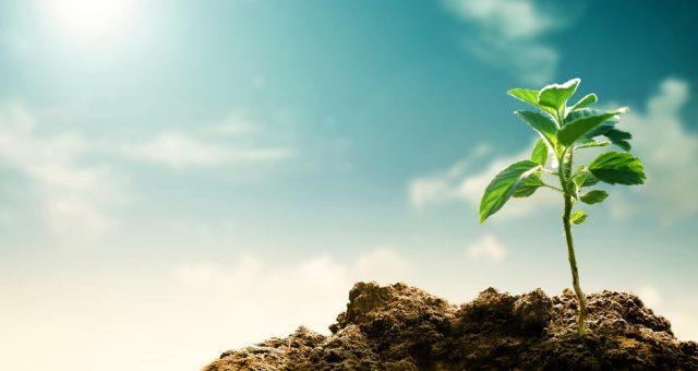 Klimat, ziemia, środowisko. Fot. Shutterstock