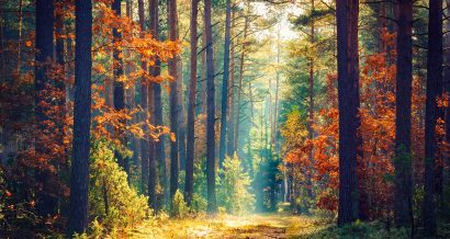 natura, fot. Shutterstock.