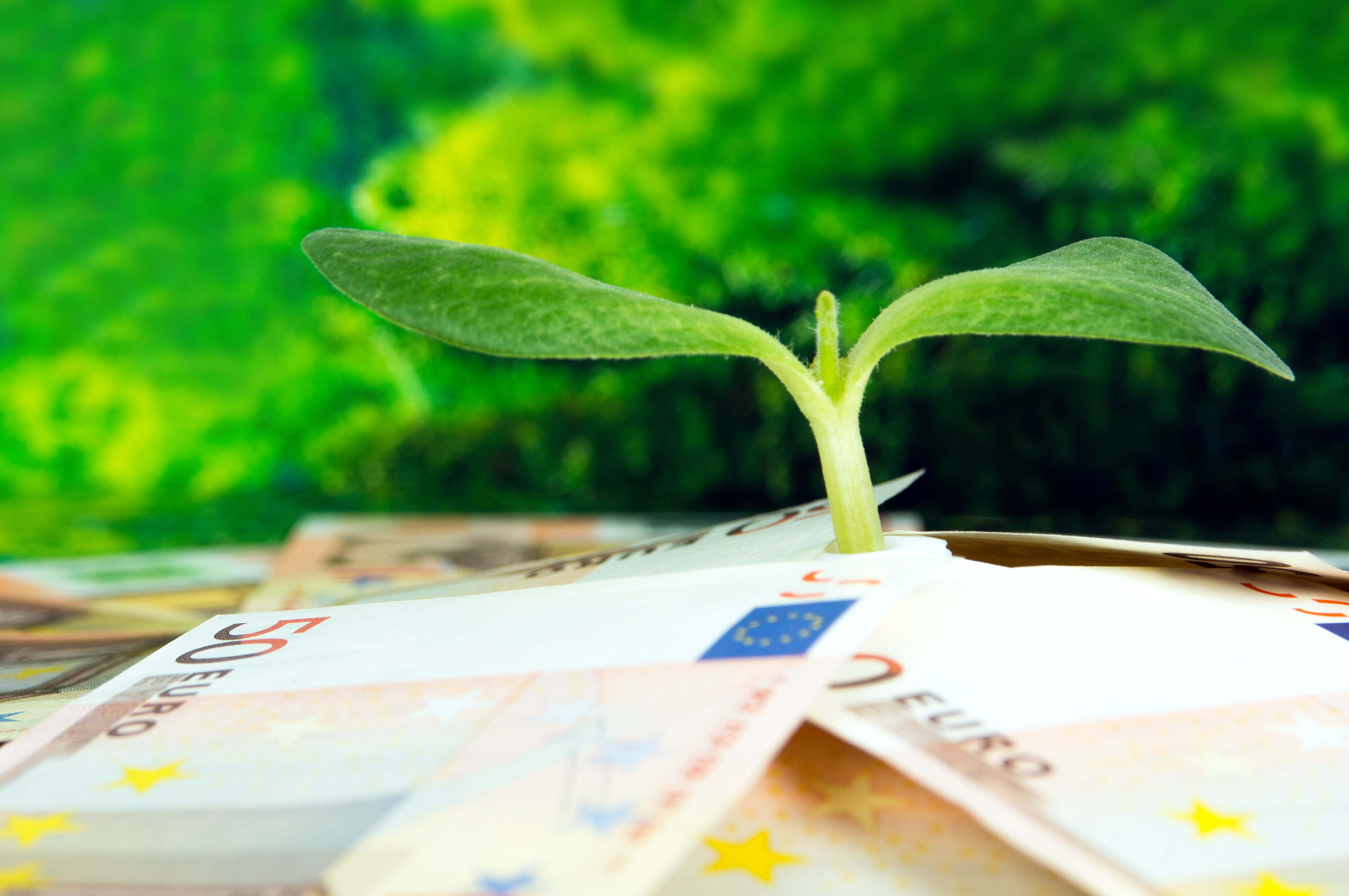 Europejski Zielony Ład, fot. Shutterstock.